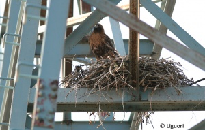 nest in cochin